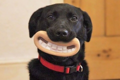 funny-dogs-pet-toys-1jpg