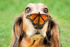 funnydogs-8_1280x675